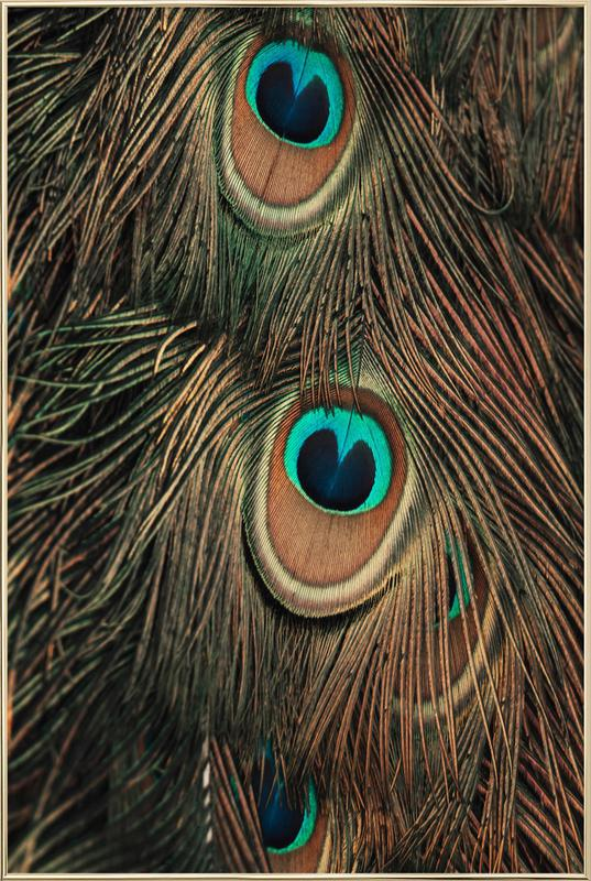 Peacock Feathers -Poster im Alurahmen