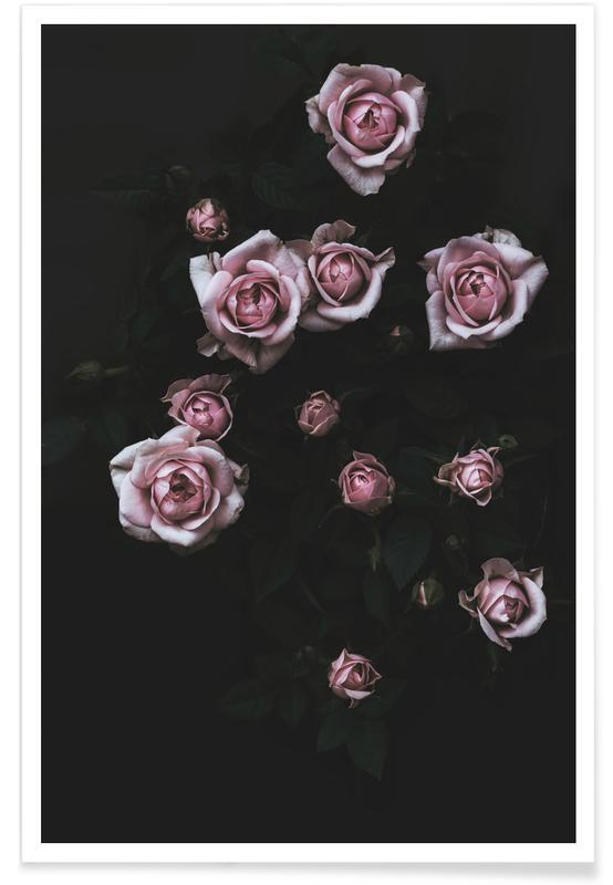 Velvet Rose Pink Poster