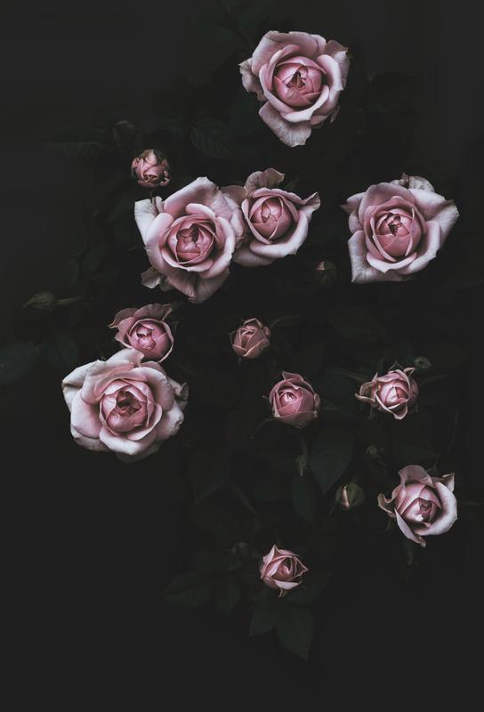 Velvet Rose Pink alu dibond