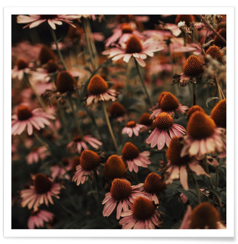 , Echinacea poster