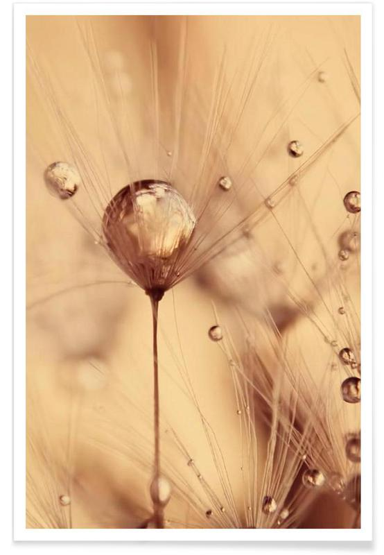 , a touch of gold affiche