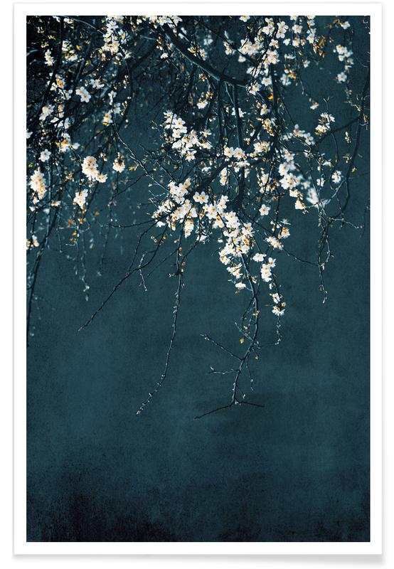 , Cherry Blossoms Poster