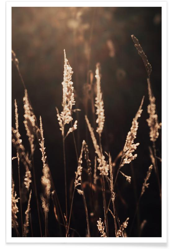 Sonnenuntergänge, Golden Light 2 -Poster