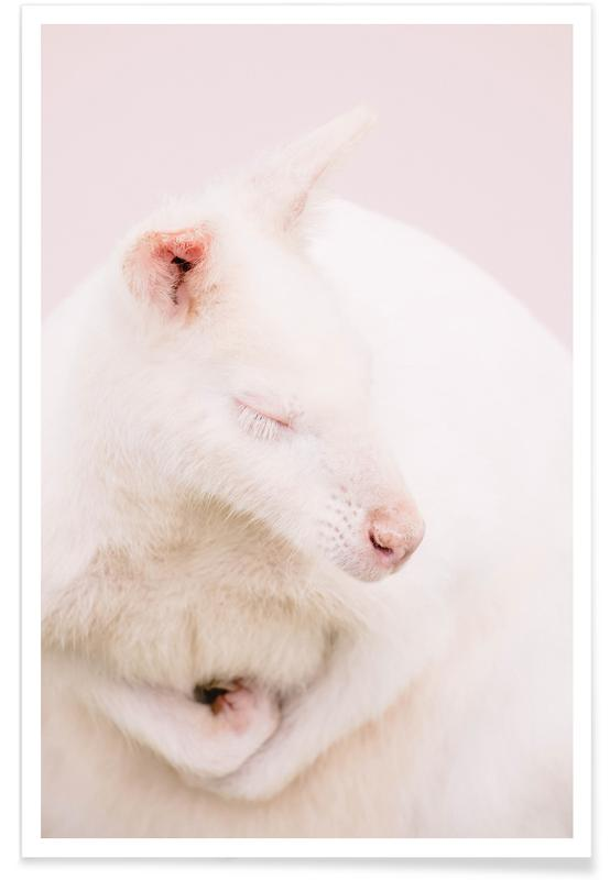, Pixie The Kangaroo -Poster
