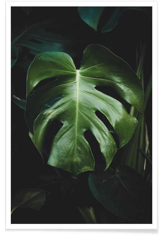 Arbres, Montagnes, Forêts, Feuilles & Plantes, Monstera Leaf affiche