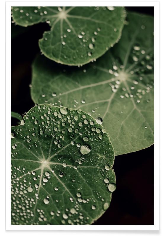 Arbres, Montagnes, Forêts, Feuilles & Plantes, Nasturtium Leaves affiche