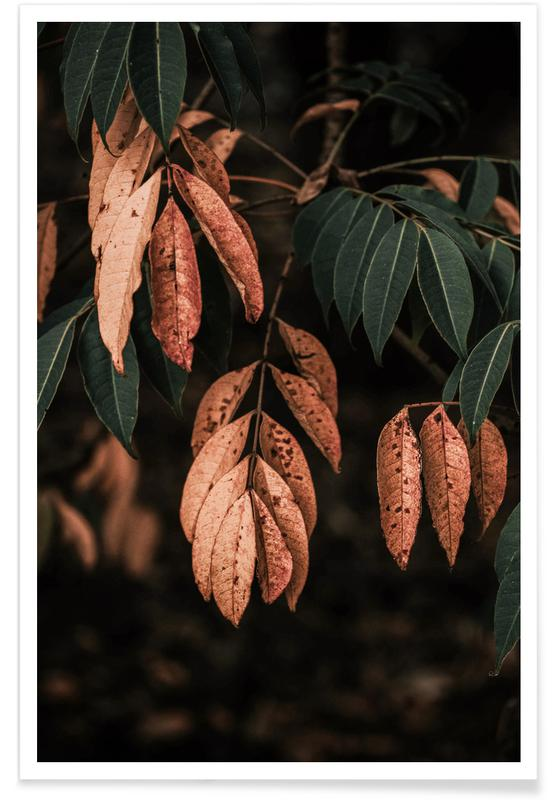 Trees, Forests, Mountains, Leaves & Plants, Light In Darkness Poster