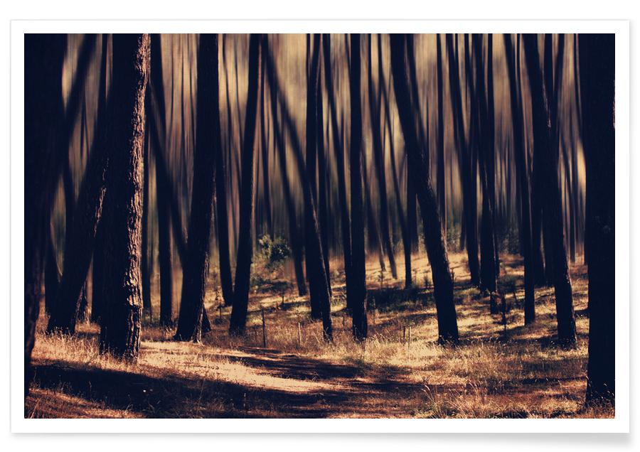 Forêts, follow the light affiche