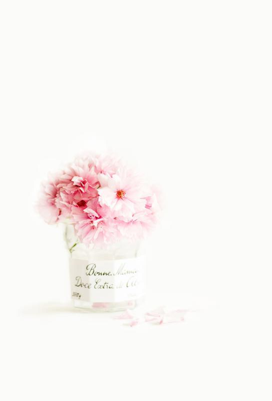 pink blossoms -Acrylglasbild