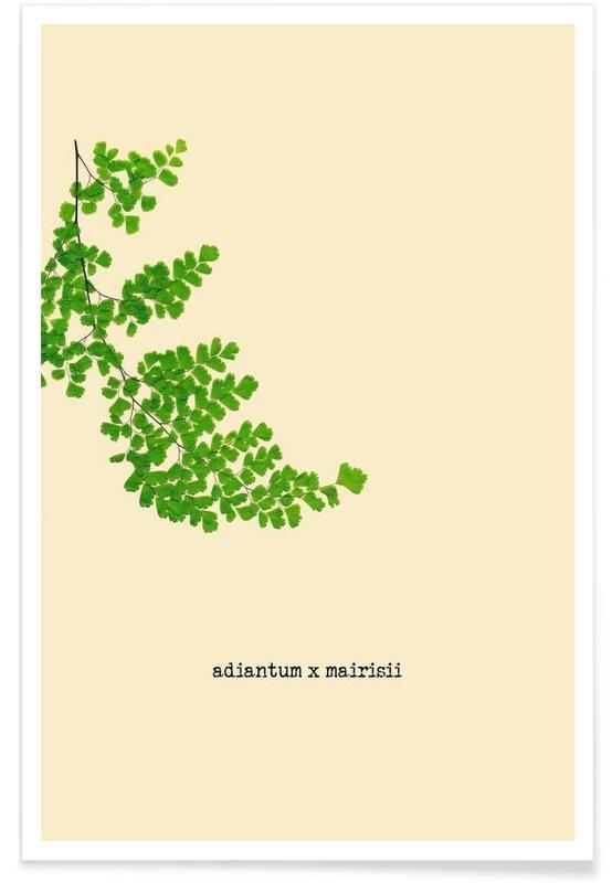 Feuilles & Plantes, Adiantum X Mairisii affiche