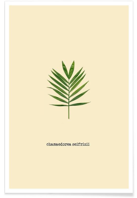 Feuilles & Plantes, Chamaedorea Seifrizii affiche