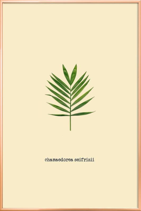 Chamaedorea Seifrizii -Poster im Alurahmen