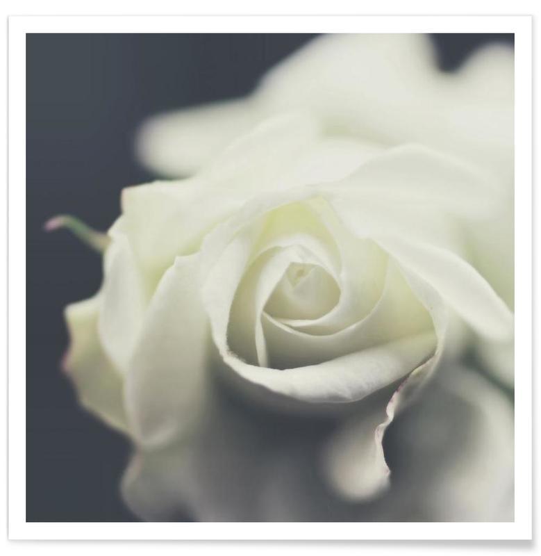 Black & White, Roses, Ivory Poster