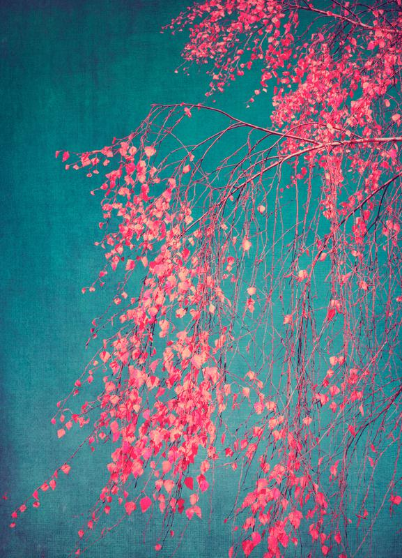 Whispers Of Pink canvas doek