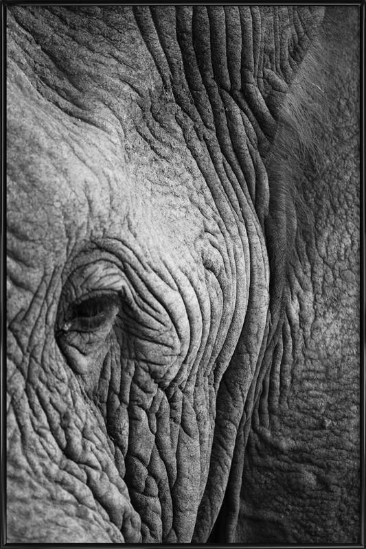 Nambithi Elephant 01 affiche encadrée