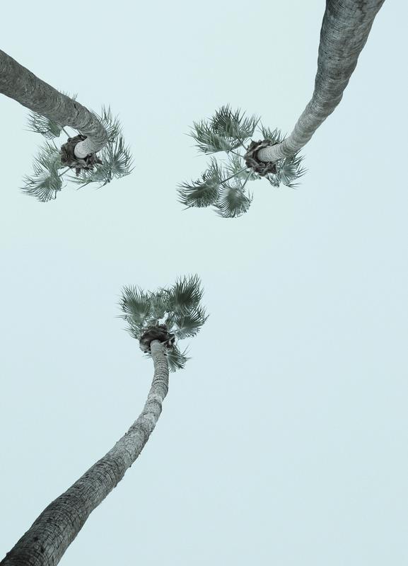 Palm Springs -Leinwandbild