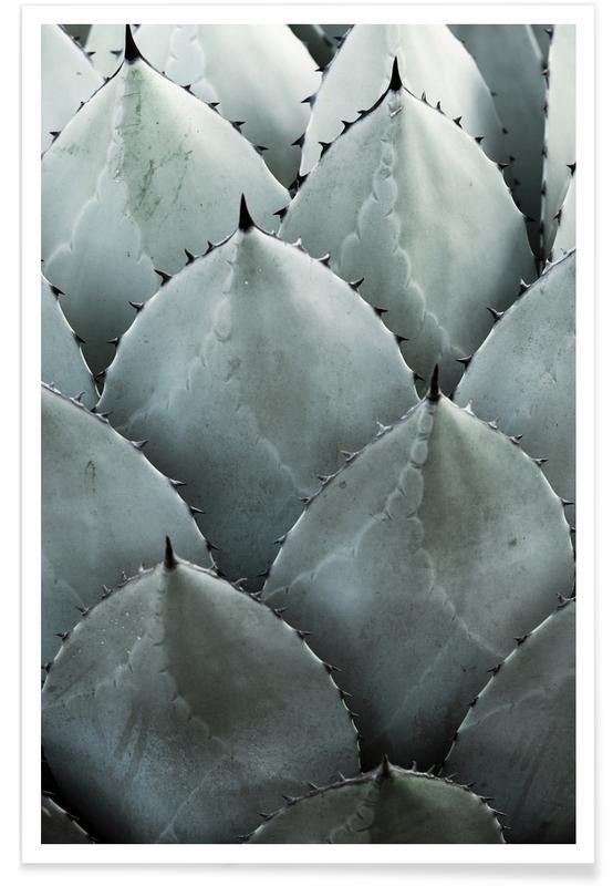 Kaktus, Blade & planter, Agave Plakat