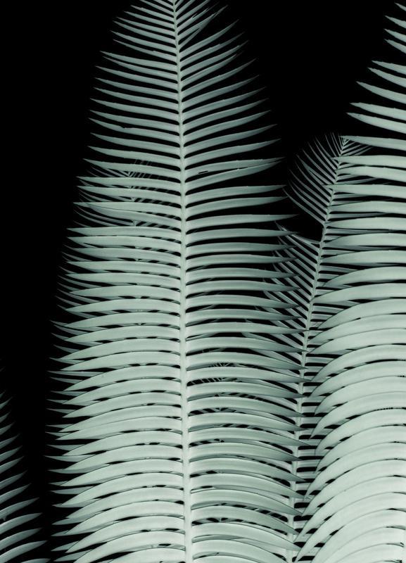 Cycas -Leinwandbild