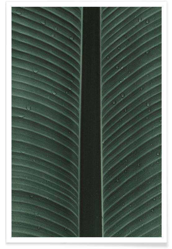 Blätter & Pflanzen, Strelitzia 02 -Poster