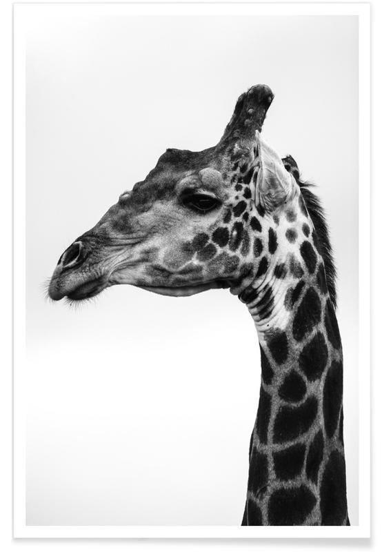 Noir & blanc, Girafes, Giraph affiche