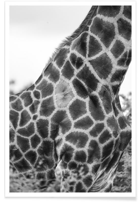 Schwarz & Weiß, Giraffen, Giraph detail -Poster
