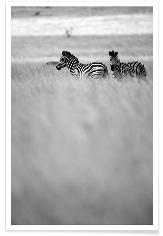 Zebra Pair -Poster