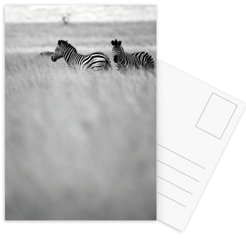 Zebra Pair -Postkartenset