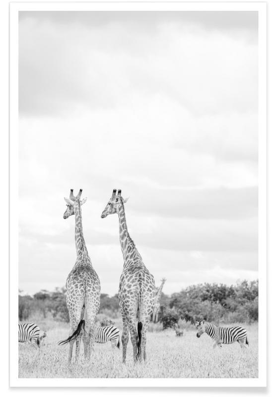 Noir & blanc, Girafes, Giraph couple affiche