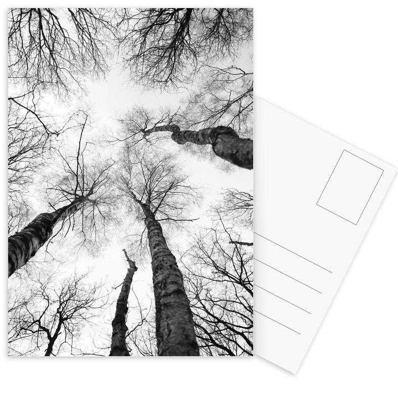 Zwart en wit, Bomen, Bossen, Everglades ansichtkaartenset