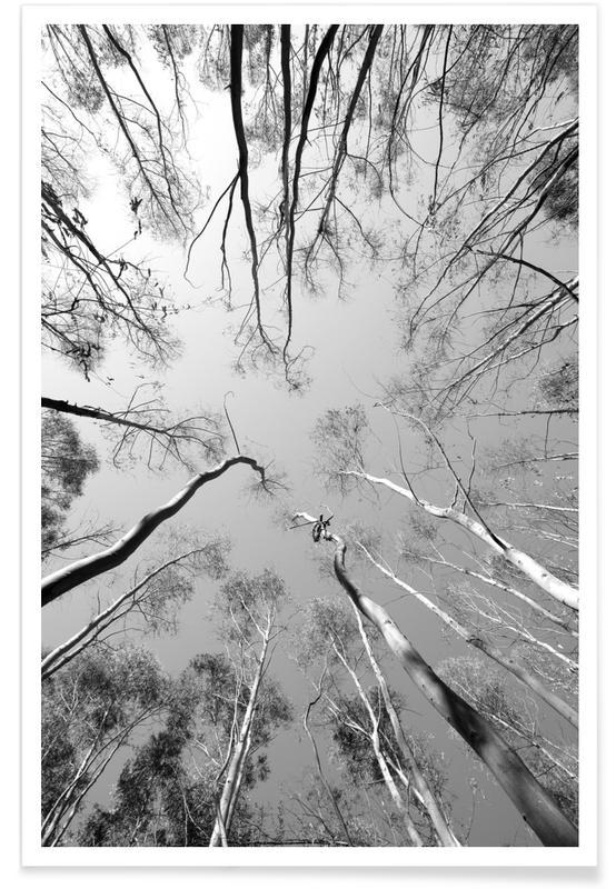 Arbres, Noir & blanc, Forêts, Plantations affiche