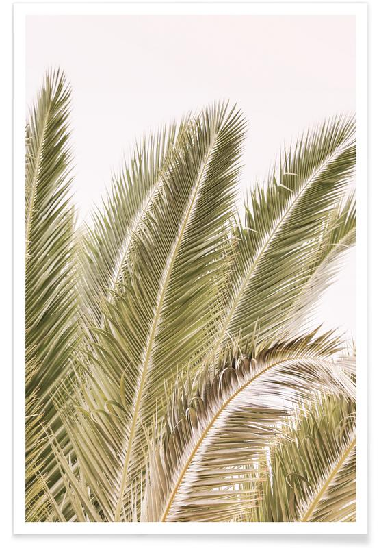 Palms, Oasis Palm 1 Poster