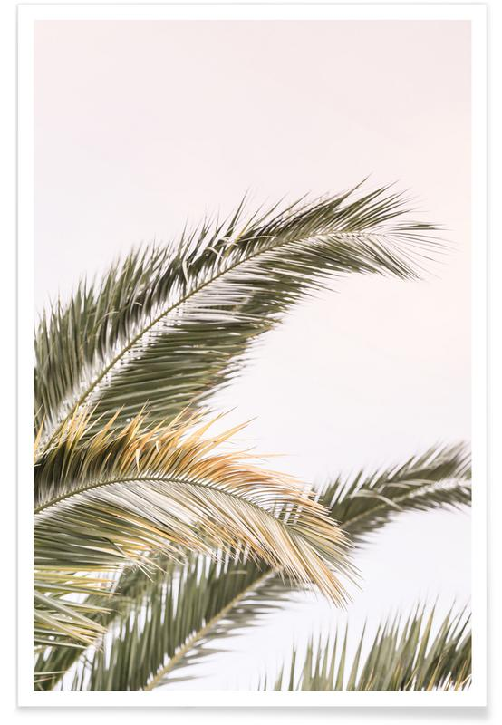 Palmen, Oasis Palm 3 -Poster