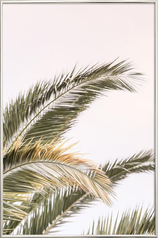 Oasis Palm 3 Poster i aluminiumram