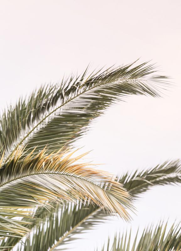 Oasis Palm 3 Canvastavla