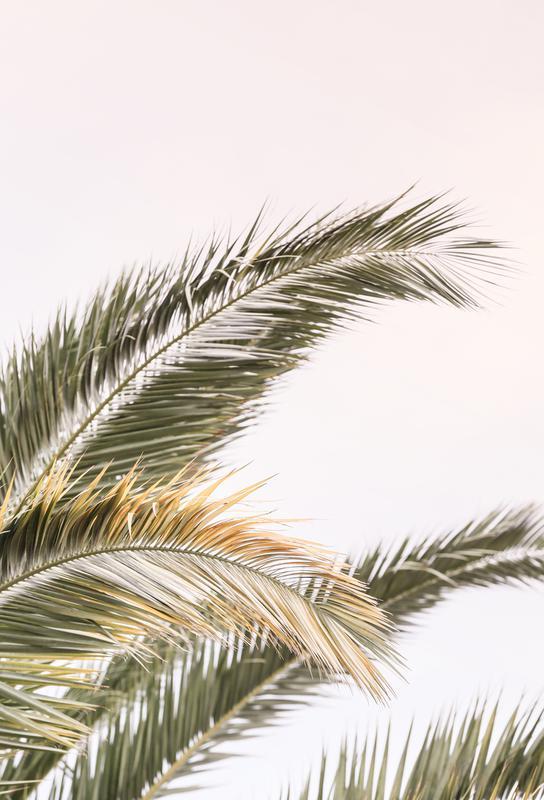 Oasis Palm 3 alu dibond