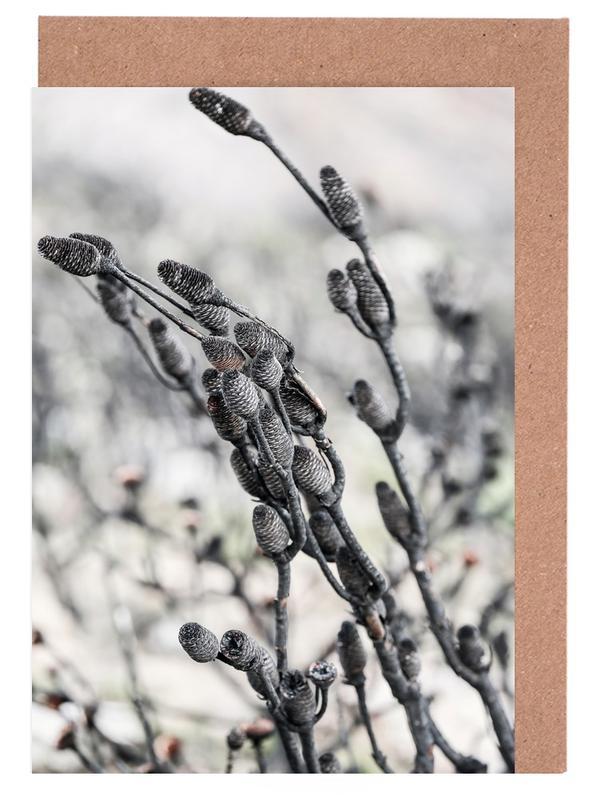 Swartberg Protea 4 Greeting Card Set