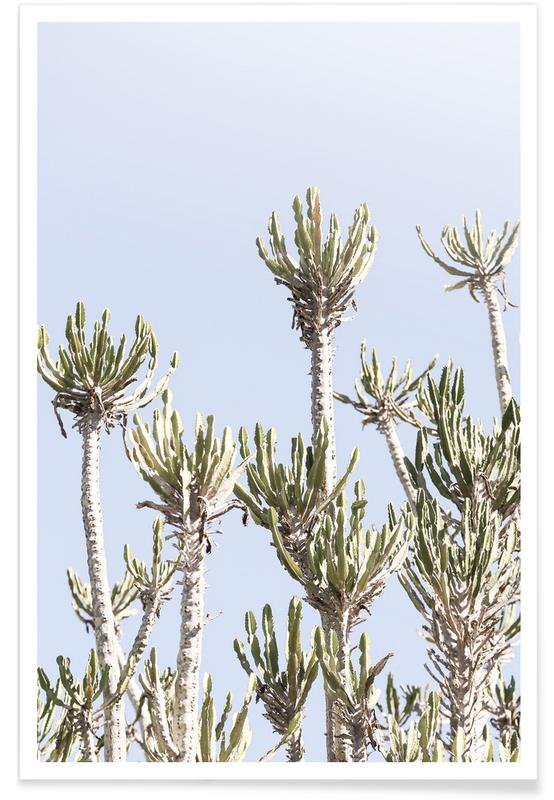 Tankwa Euphorbia 2 Poster