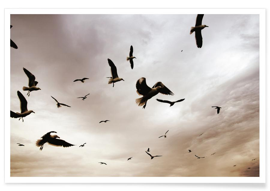 Mouettes, Ciels & nuages, Flight & Freedom affiche