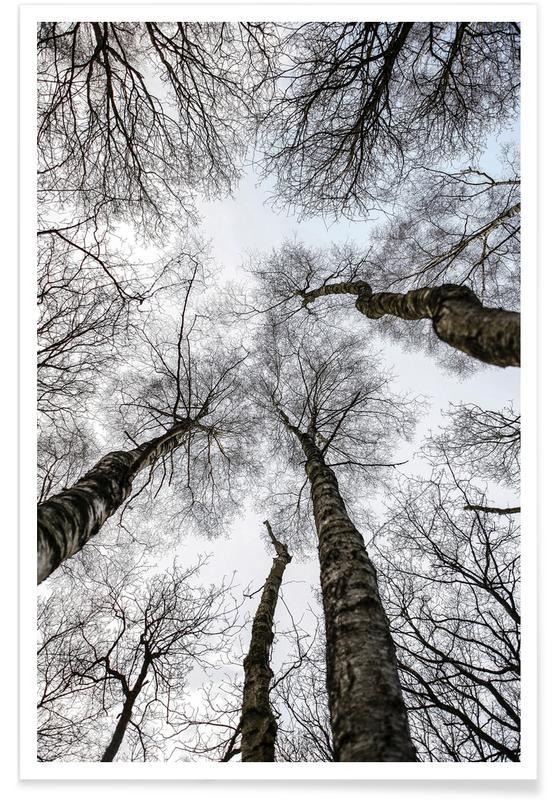 Bossen, Bomen, Forest 1 poster
