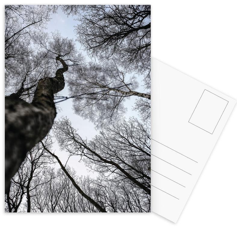 Forests, Trees, Forest 2 Postcard Set