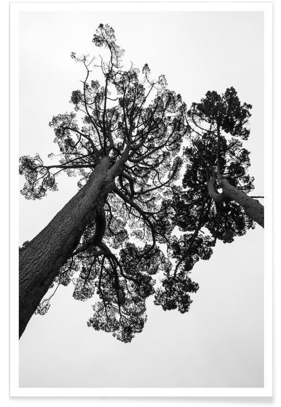 Black & White, Trees, Japanese Garden 2 Poster