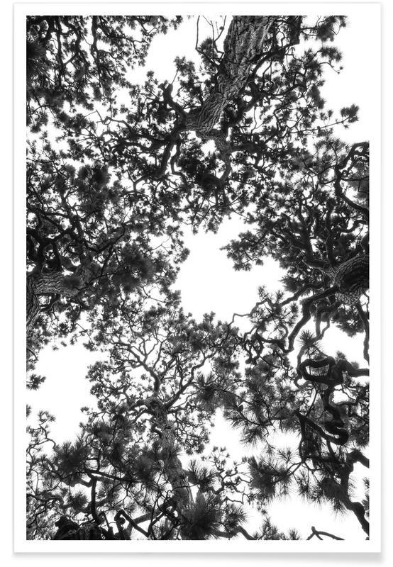 Japanese Garden 4 Poster