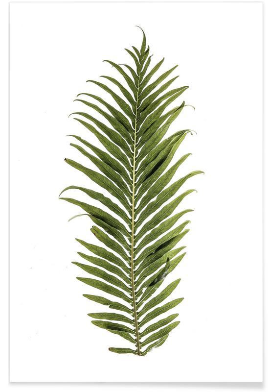 Leaf Study 1 Poster
