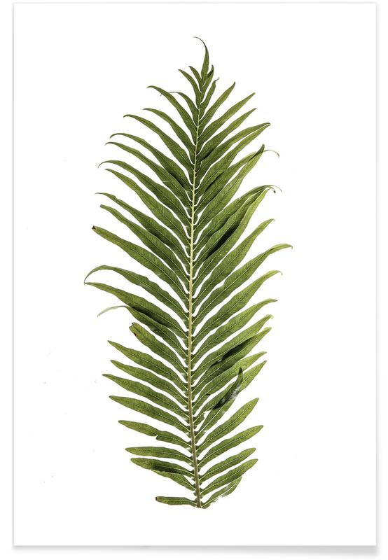 Leaf Study 1 -Poster