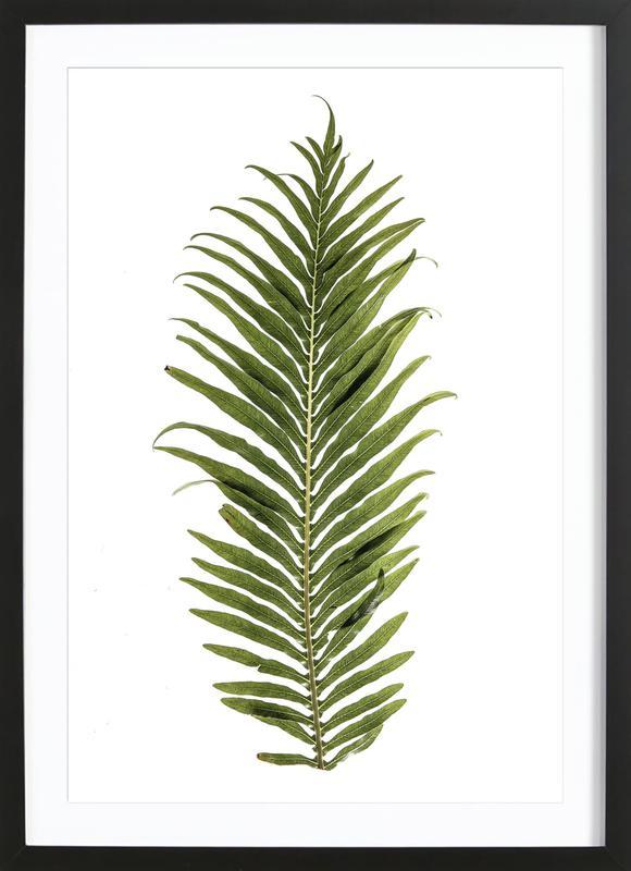 Leaf Study 1 ingelijste print