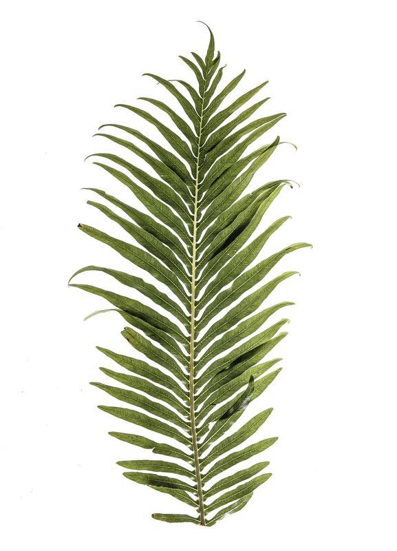 Leaf Study 1 -Leinwandbild