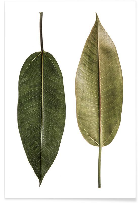 Leaf Study 5 affiche
