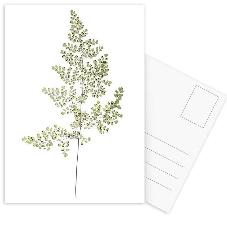 Leaf Study 6 Postcard Set