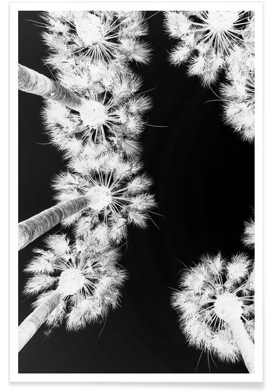 Black & White, Palms, Palm Springs Poster