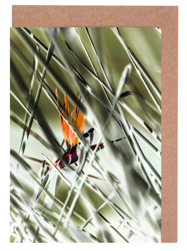 Strelitzia -Grußkarten-Set